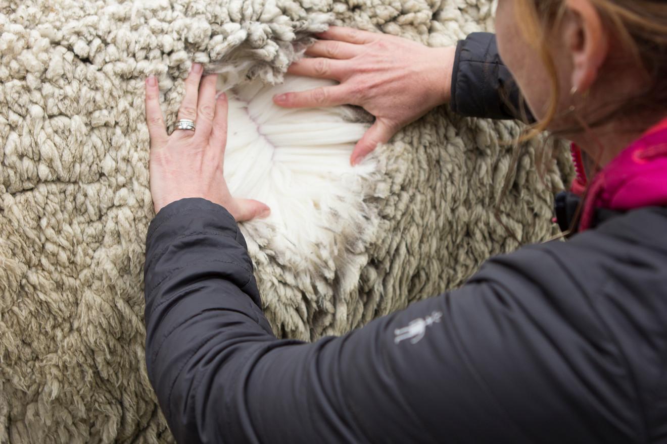 Quality fibre - Craigneuk