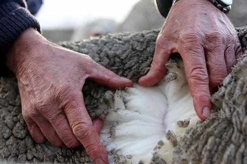 Otematata merino fibre in hand.jpg