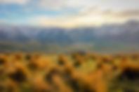 NZ merino station landscape.jpg