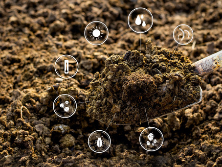 Why Dirt and Soil Aren't The Same Thing And The Mindset Shift Behind It