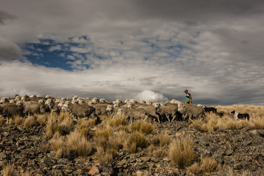 High Country Mustering