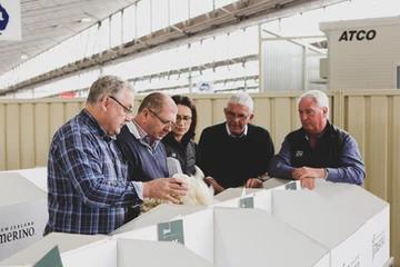 Wool Classing at New Zealand Merino