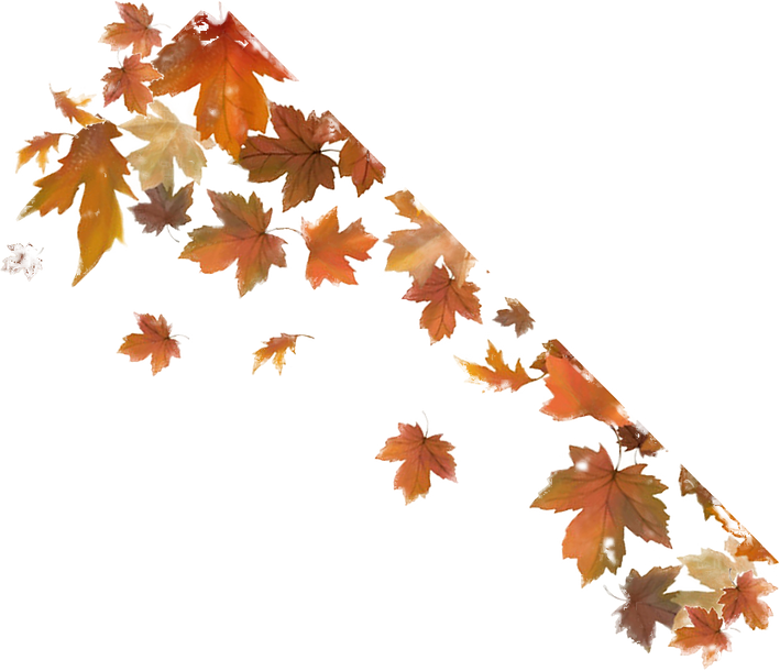 fall%2520leaves_edited_edited.png