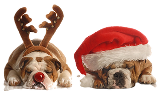 Christmas%25252520Bulldogs_edited_edited