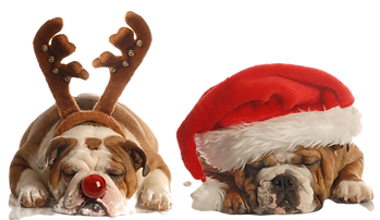 Christmas%25252520Bulldogs_edited_edited
