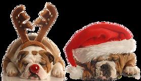 Christmas%20Bulldogs_edited.png