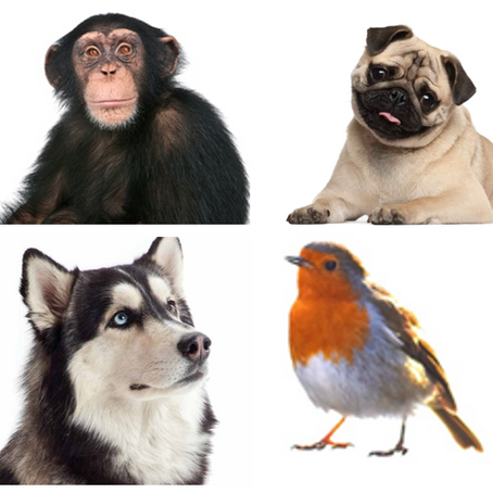 Animal Recognition Tests: Calling all experts!