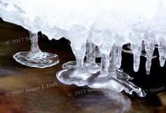 Bare_Foot_Ice.jpg