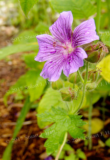 Purple_Flower_Library.jpg