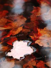 Fall_Reflections_086_100707.jpg