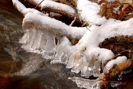 Snow_Ice_Wood_6_122906.jpg