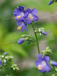 Purple_Flower_0102_060708.jpg