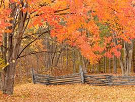 Colors_n_Fence_0051_102206.jpg