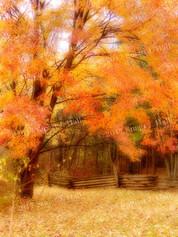Fall_Colors_w_Fence_Vert.jpg