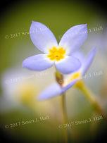 Flower Macro Image