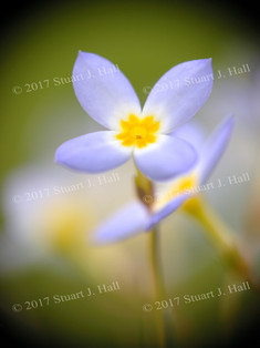 Forget_Me_Not_053_051608.jpg