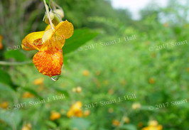 Yellow_Flower_with_Water_Drop.jpg