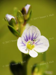 Micro_Violet_14_18_052408.jpg