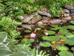 SI_LILY_POND_070814