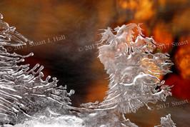Ice_Dragon_0096_012307.jpg