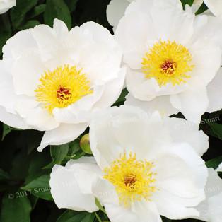 White_Flower_043_061408.jpg