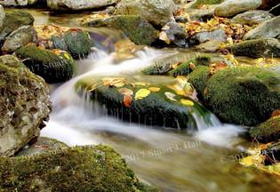 Mossy_Rocks.jpg