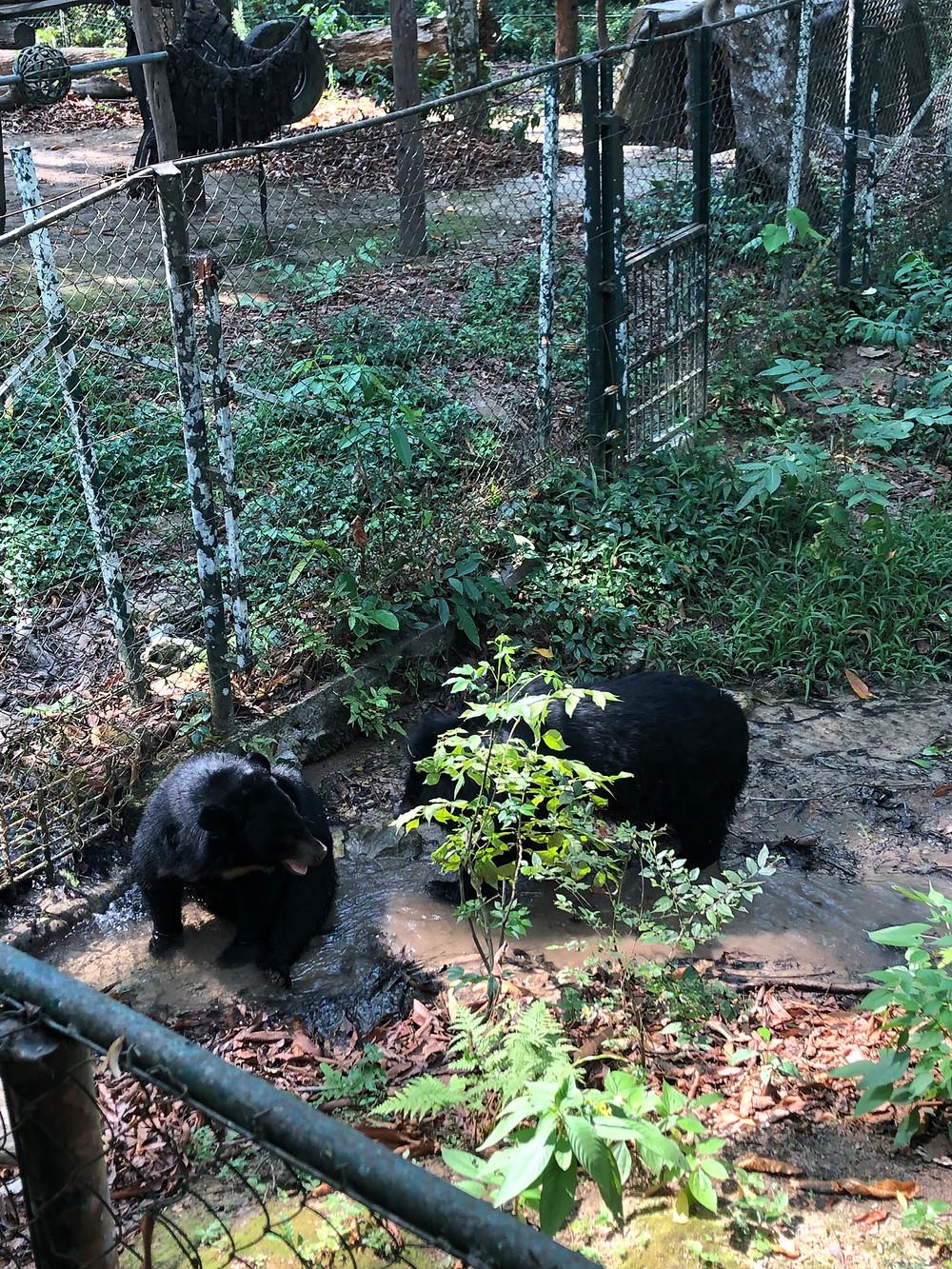 kuang si waterfall bear laos luang prabang