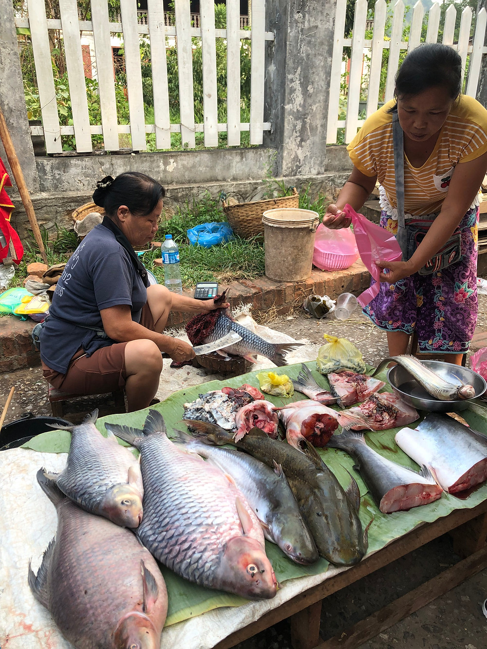 fish seafoos morning market laos luang prabang