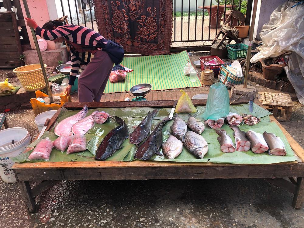 fish seafood morning market laos luang prabang