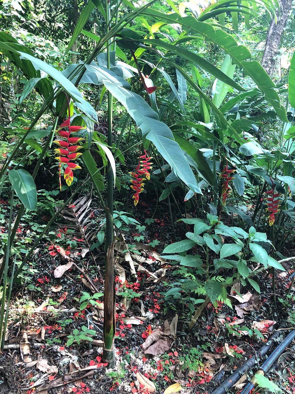 kuang si waterfall flower laos luang prabang