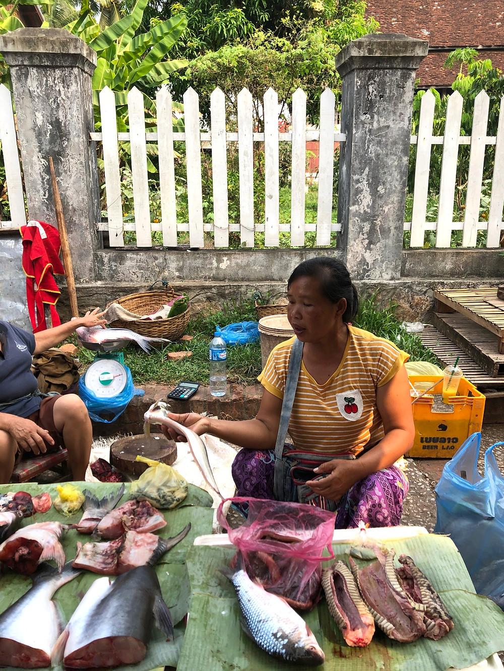 snake python jungle morning market laos luang prabang