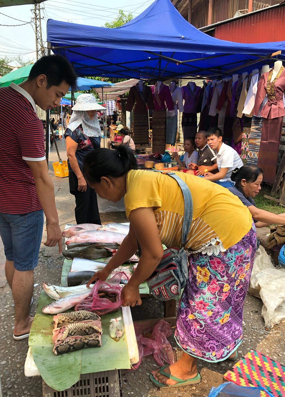 morning market jungle snake python laos luang prabang