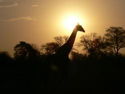 Südafrika 2005