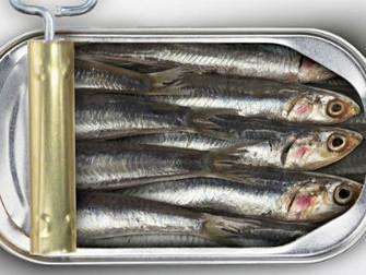 Que peixe você quer?