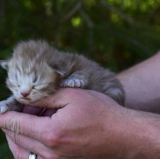 Sugar Baby Newborn (4).JPG