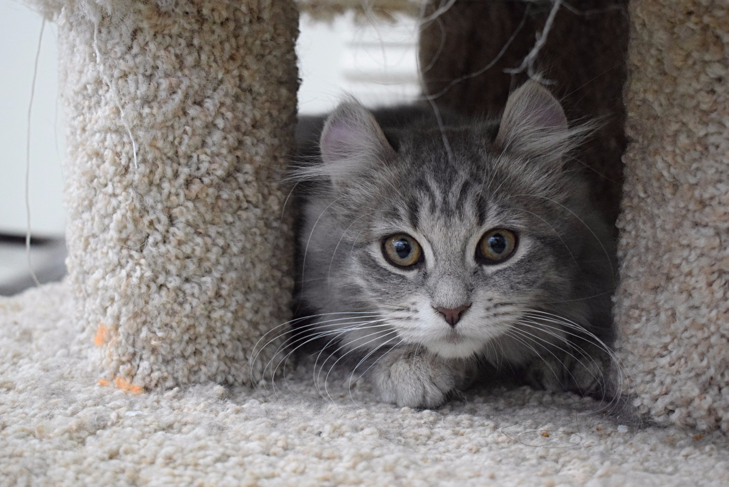 Ready to Pounce!