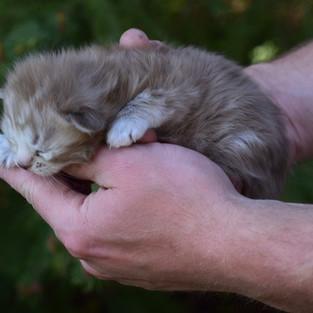 Sugar Baby Newborn (3).JPG