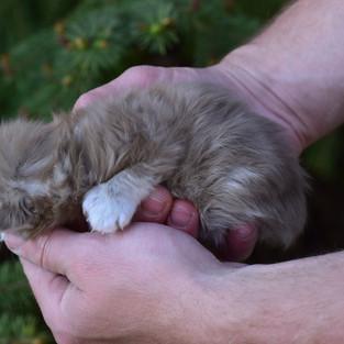 Sugar Baby Newborn (6).JPG