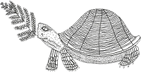 turtle new 1 (1).png