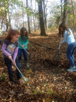 Making a forest trail