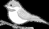 new bird (1)_edited.png