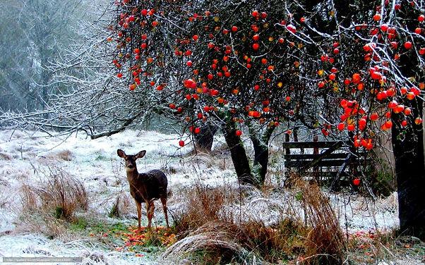 352-3525501_download-wallpaper-deer-wint