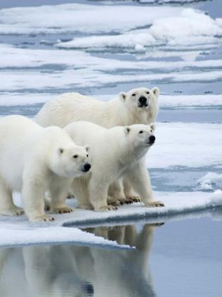 Come to Polar Bear Capital