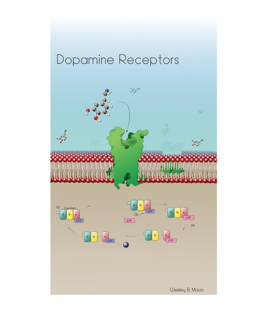 Dopamine Receptor.jpg