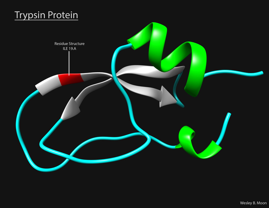 TrypsinProteinAdj.jpg