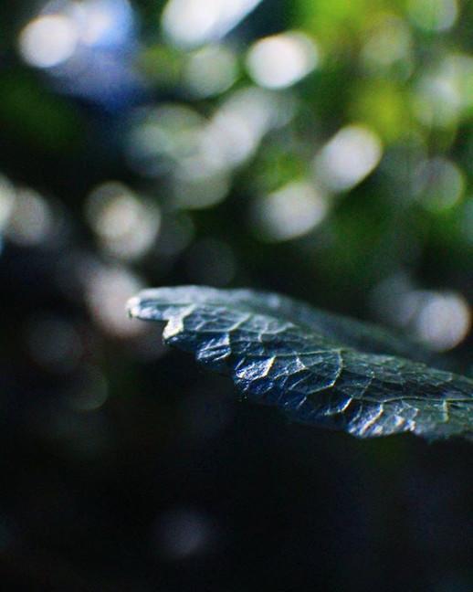 Fingerprint Plants ,_■_□_○_● °__sorry I'
