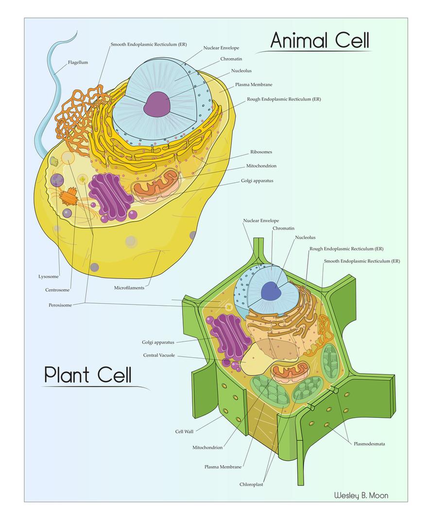 Animal & Plant Cell.jpg