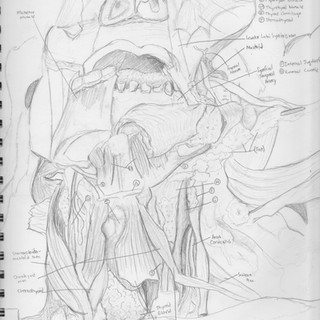 Frontal Head Sketch