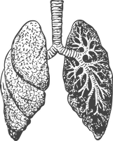Lung%2520-%2520Red%2520tansparent%2520ba