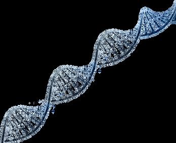 DNA - Transparent Background.png